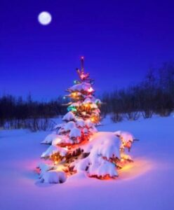 holiday depression, Christmas tree