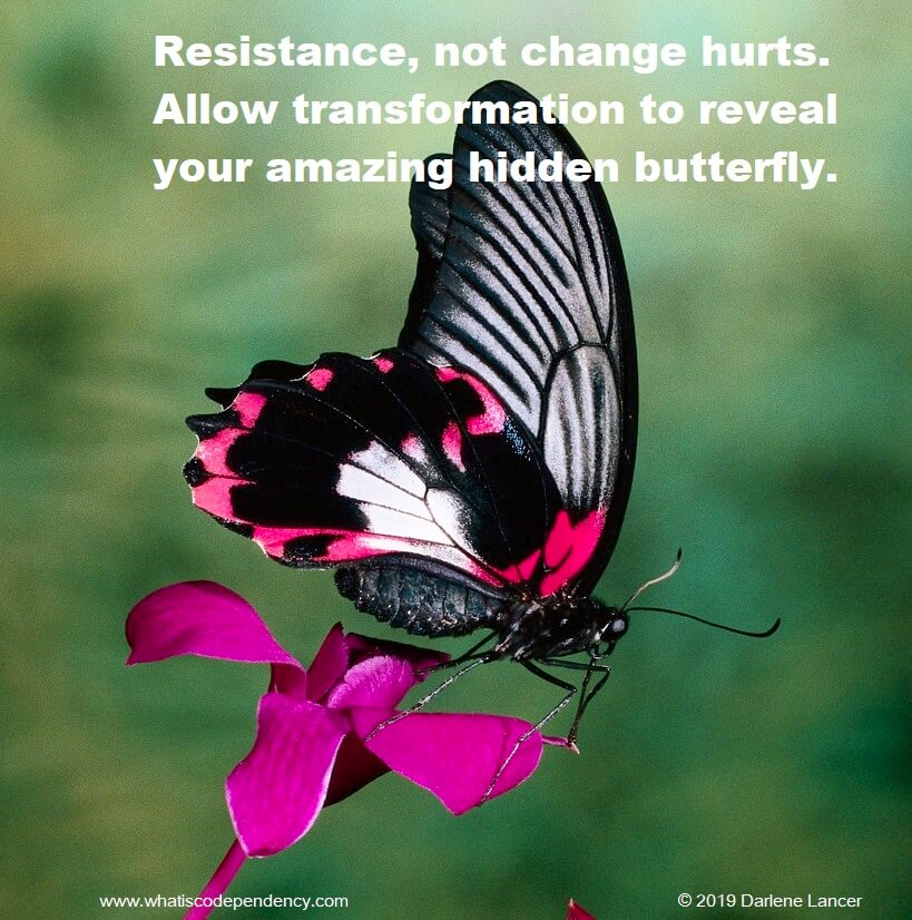 transformation, butterfly